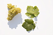 White wine grapes, variety 'Nobling'