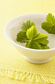 Strawberry leaves in a bowl