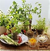 Stillleben mit Gemüse, Trockenobst, Gewürzen und Kräutern