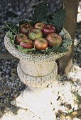 Apples in a decorative old stone urn
