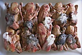 Plucked pigeons