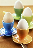 Four boiled eggs in eggcups