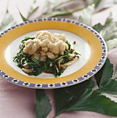Bullfrog with chives