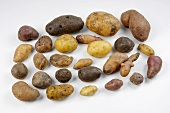 Various types of potatoes on white background