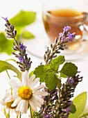 Fresh herbs for herb tea