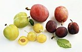 Various types of plums on white background