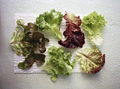 Individual leaves of different salad crops