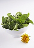 Dandelion leaves in a small bowl and a flower
