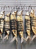 Grilled garfish
