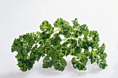 Curled parsley on white background