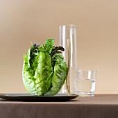 Green salad with green tea dressing