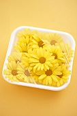 Yellow daisies in polystyrene dish