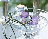 Bowl of water with campanula flowers and papyrus