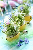 Cress and flowers in lemon skins