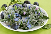 Wreath of borage, sage and plums