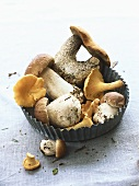 Assorted mushrooms in a baking tin