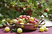 Fresh gooseberries in a silver bowl