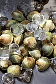 Fresh clams with ice cubes