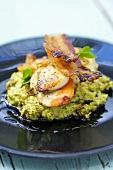 Scallops on pea puree with bacon