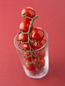 Cherry tomatoes on the vine standing in a glass
