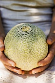 Two hands holding a netted melon