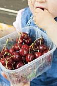 Small girl eating cherries