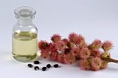 Ricinus fruits, seeds and oil (Castor oil)