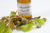 Bach Flowers tincture: Purple Beech