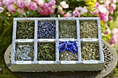 Dried herbs and flowers in typesetter's case
