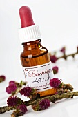 Bach Flowers tincture: Larch