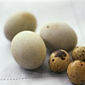 Quail and guinea-fowl eggs