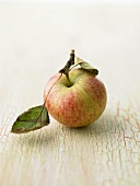 An apple with leaves