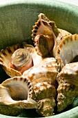 Boiled whelks