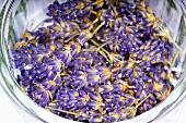 Dried lavender flowers in a jar