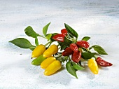 Red, yellow and green chillies on stalk