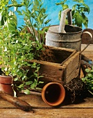 Herb box, potted herbs and watering can