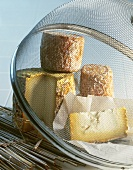 Various types of cheese under a cover