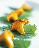 Fried chanterelles on nettle leaves