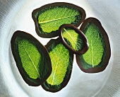 Mint leaves with chocolate edges