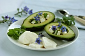 Avocado stuffed with mozzarella and borage flowers