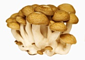 Brown beech mushrooms (Buna-shimeji)