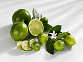 Limequats and limes with leaves