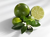 Whole and half lime, limequats, leaves and flowers