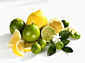 Lemons, limes and limequats