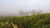 View over vineyard and estate house (France)