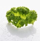 A frozen kale leaf