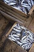 Sardines in wooden crates