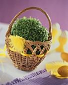 Garden cress in a small basket