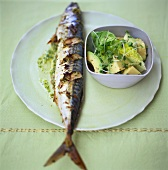 Gegrillte Makrele mit Avocadosalat