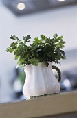 Flat-leaf parsley in a china jug